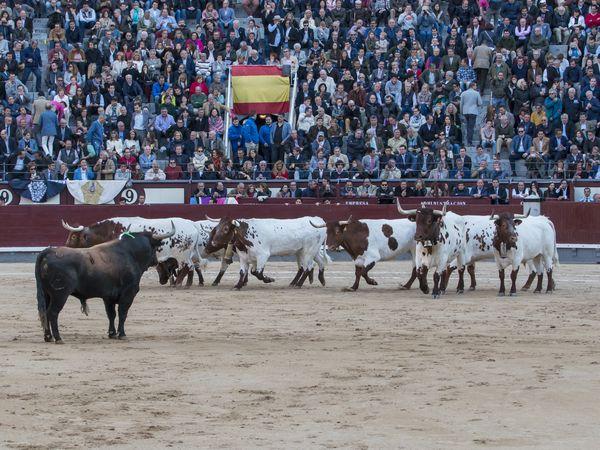 Asociación EL TORO de Madrid5