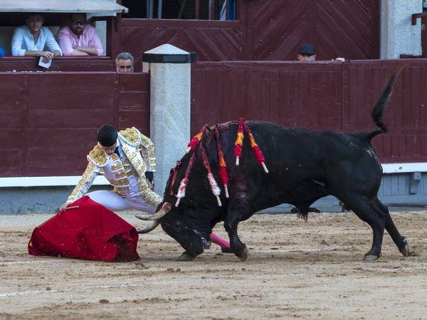 Asociación EL TORO de Madrid