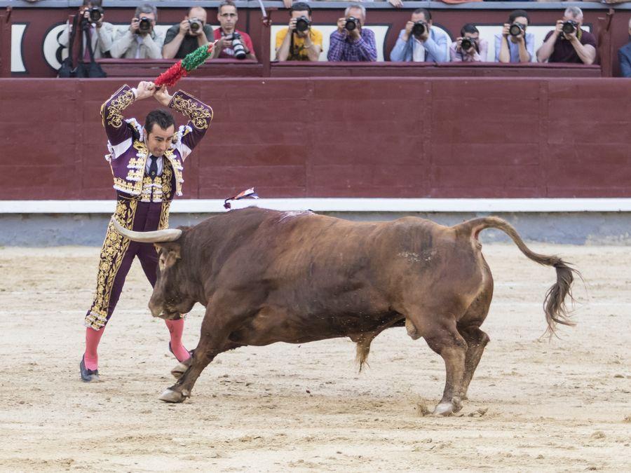 Asociación EL TORO de Madrid9