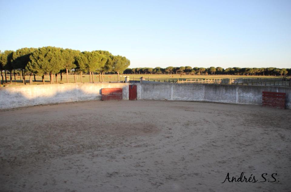 Asociación EL TORO de Madrid35