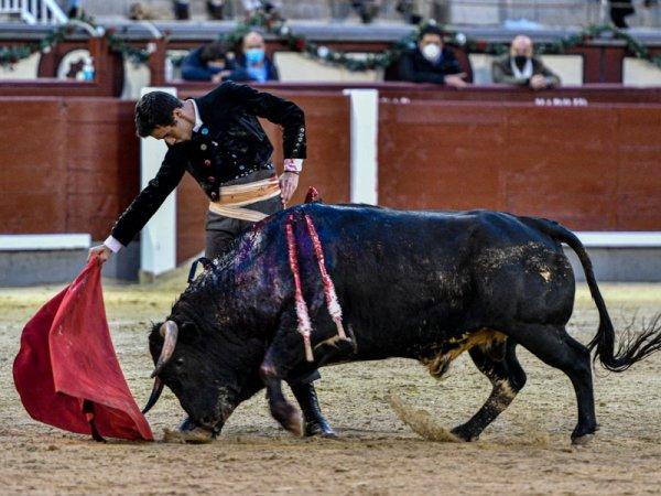 Asociación EL TORO de Madrid12