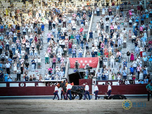 Asociación EL TORO de Madrid6