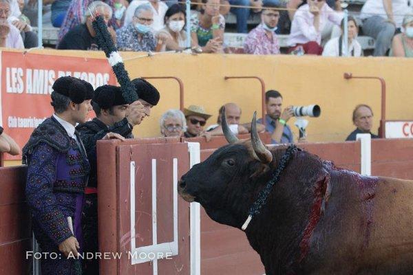 Asociación EL TORO de Madrid19