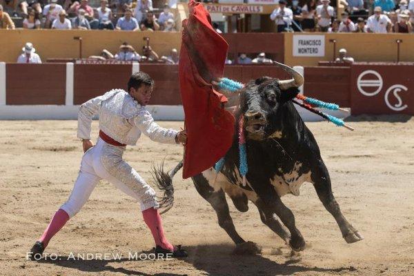 Asociación EL TORO de Madrid13