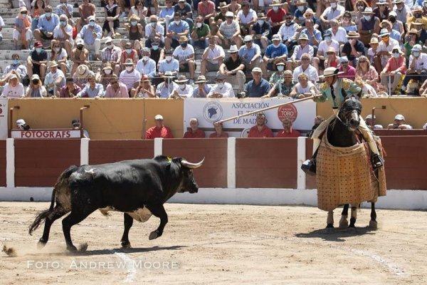 Asociación EL TORO de Madrid24