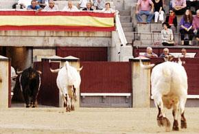Uceda Leal, matador de toros