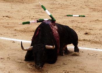 El listón, como los toros, por el suelo