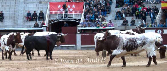 Curro Díaz, no es un torero joven, pero también pide sitio