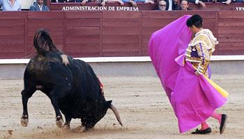¿Y el toro, dónde está el toro?