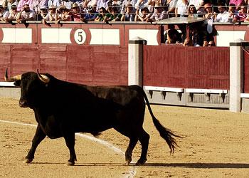 Un gran toro y un torero vulgar