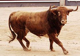 Un torero clásico y dos modernos