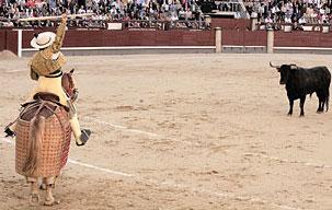 Al fin, toros de lidia, pero sin toreros preparados para ellos
