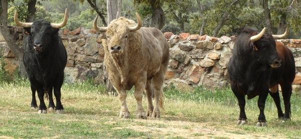 Visita a la ganadería de El Montecillo