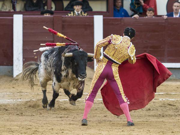 Sin toro no hay toreo señores