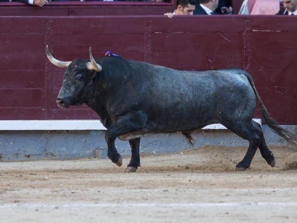 Ureña y Pastelero trajeron la grandeza del toreo