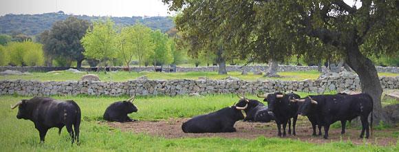 Visita a la ganadería Baltasar Iban y Hnos. Quintas