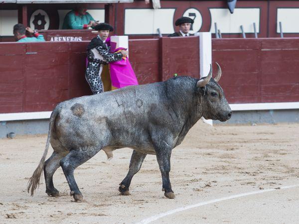 ¡Va por ti, anónimo aficionado de Palencia!