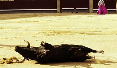 Toros potables, toreros no potables