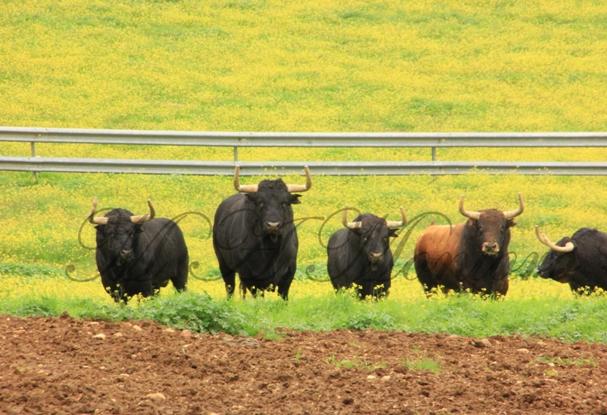 Visita a la ganadería de Jandilla y Peñas Blancas