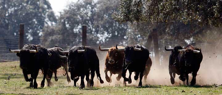 España y Francia, naciones que aman y defienden la tauromaquia