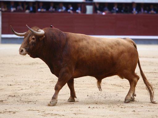 Top 10 toros más bravos por la Asociación El Toro de Madrid (I)