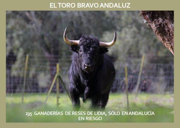 Apoyo a la Plataforma Toro Bravo Andaluz.