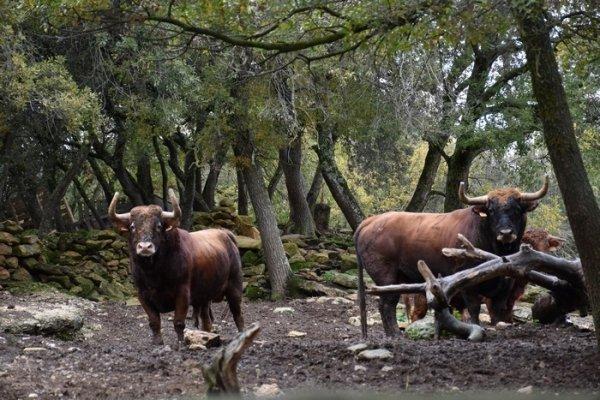 Transformación de una ganadería de Casta Navarra